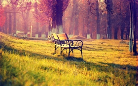 Beautiful autumn park, bench, trees, golden HD wallpaper