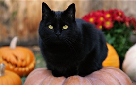 Black cat, yellow eyes, pumpkin HD wallpaper