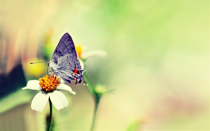 Butterfly, white flower, hazy Wallpapers Pictures Photos Images
