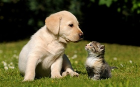 Dog and kitten HD wallpaper