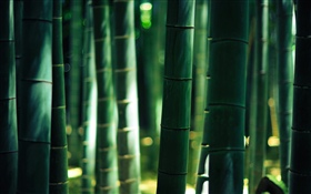 Green bamboo, stem HD wallpaper