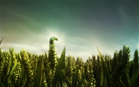 Green lizard, wheat field HD wallpaper