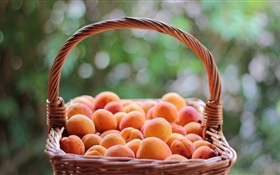 One basket apricots HD wallpaper