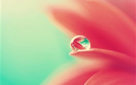 Pink flower petals, water droplet HD wallpaper