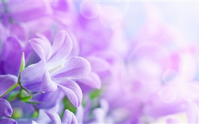 Purple flowers, spring, hazy HD wallpaper