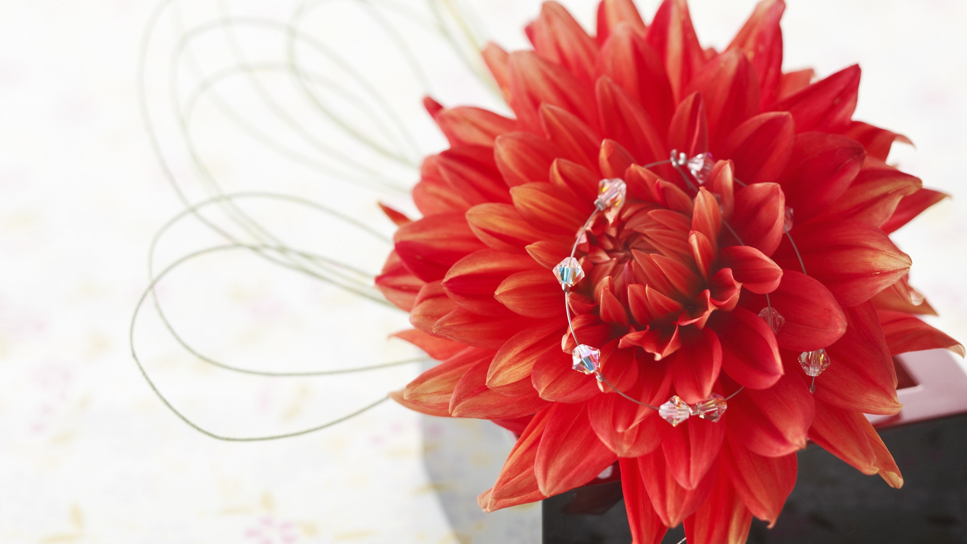 Red dahlia, petals, white background 1920x1080 wallpaper
