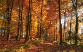 Trees, forest, autumn HD wallpaper