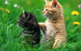 Two kittens, grass HD wallpaper